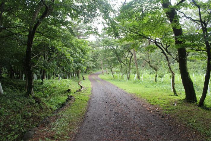 제주시험림 사려니숲길