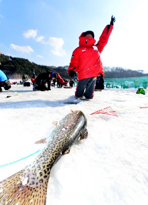 Pyeongchang Trout Festival (평창송어축제)