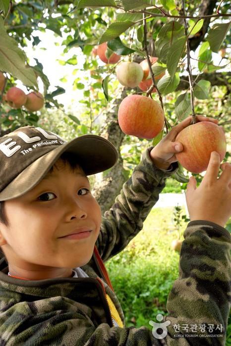 나무에 매달린 사과를 잡고 웃고 있는 남자아이