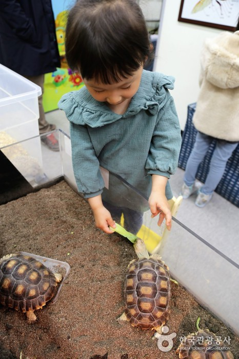 거북이에게 먹이주기 체험