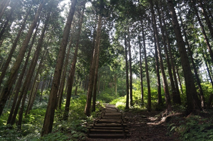 무등산편백자연휴양림(안양산자연휴양림)