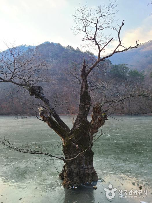 Jusanji Pond [National Geopark] (주산지 (청송 국가지질공원))