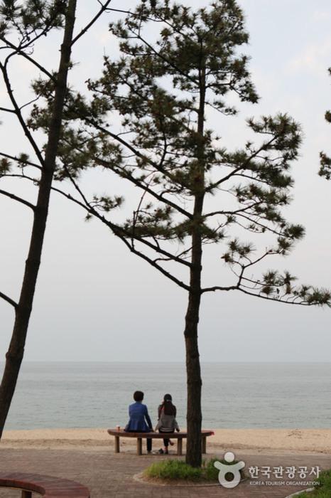 강릉 안목항 커피거리에서 바라본 바다 풍경