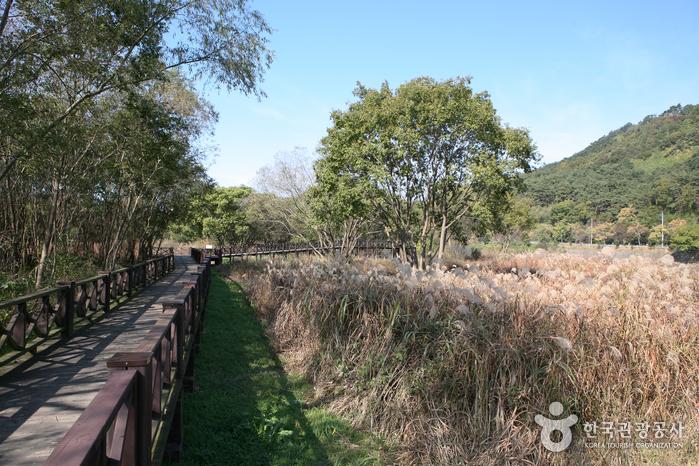 光州湖 湖生態園(광주호 호수생태원)