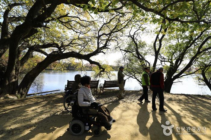 물억새와 트릭아트의 주남저수지 둑길 산책로