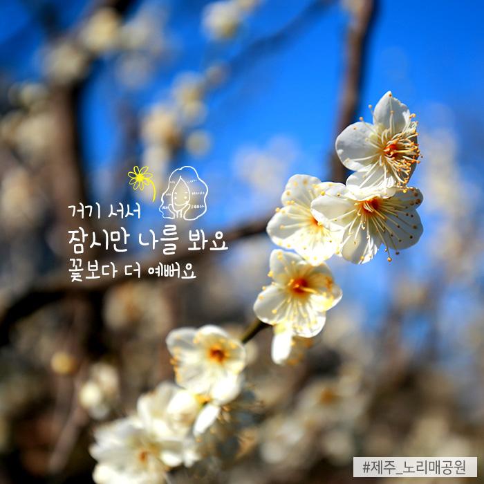 거기 서서 잠시만 나를 봐요 꽃보다 더 예뻐요 #제주_노리매공원