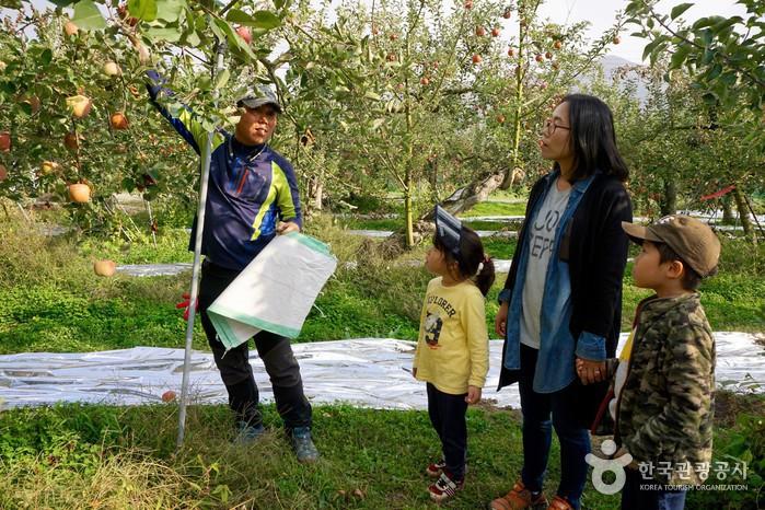 사과 따는 법을 알려주시는 농장아저씨, 열심히 설명을 듣는 엄마와 아이들