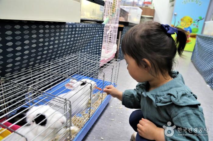 토끼에게 먹이주기