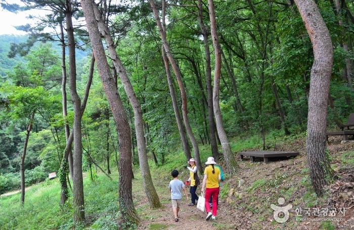 미숭산의 아름다운 숲길