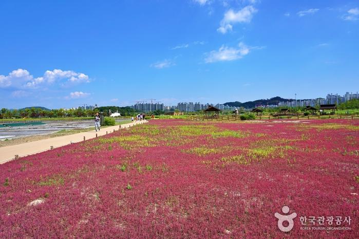 Экологический парк Кэтколь в Сихыне (시흥 갯골생태공원)7