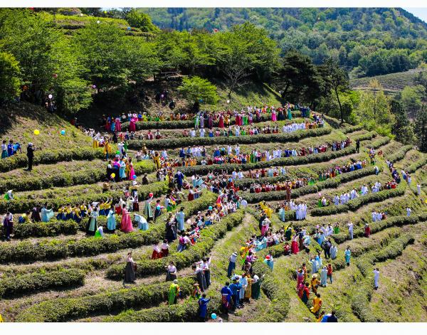 [文化観光祭り] 宝城茶香祭り([문화관광축제] 보성다향대축제)
