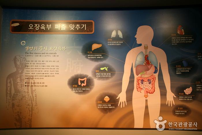 大邱藥令市韓醫藥博物館(대구 약령시 한의약박물관)7