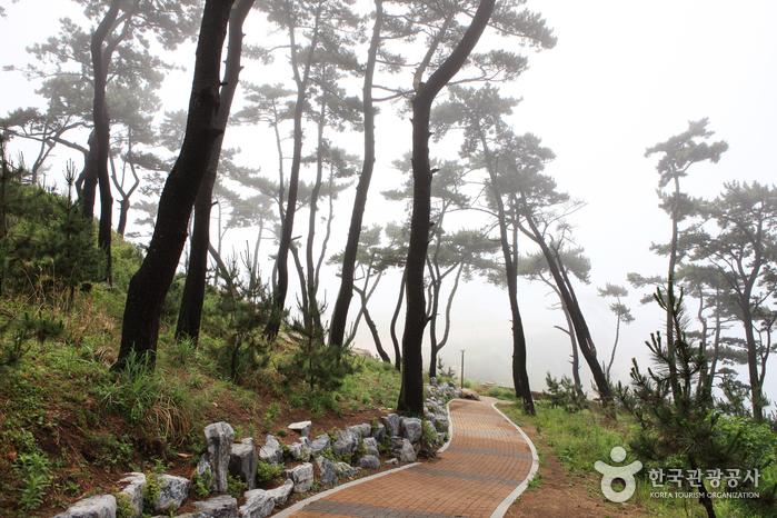 Парк Тэванам (대왕암공원)15