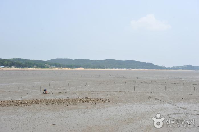 Морское побережье Масиан на острове Ёнчжондо (영종도 마시안해변)6
