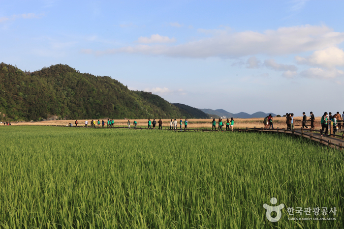 Suncheonman Bay Ecological Park (Field of Reeds) (순천만 자연생태공원)