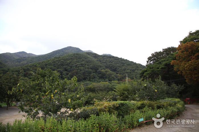 Naeyeonsan County Park (내연산군립공원)