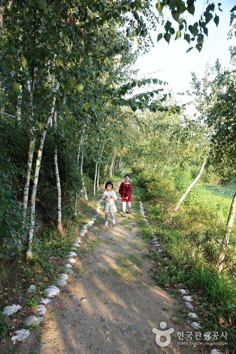 벚나무길에서 자작나무길로 산책로가 이어진다.