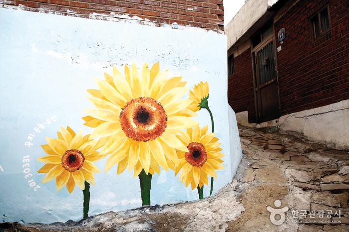 열우물 벽화마을에 해바라기 꽃이 피었다