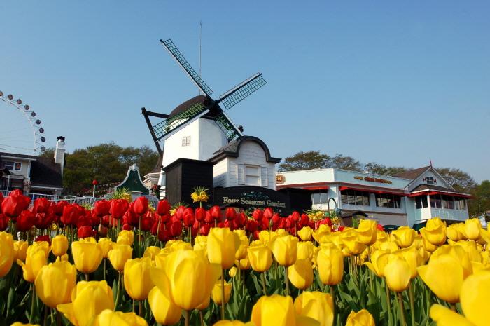 Everland Tulip Festival (에버랜드 튤립축제)
