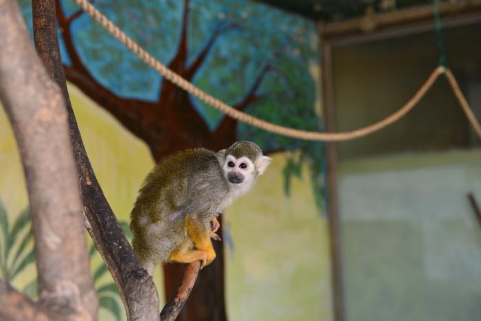 扶安 お猿の学校 自然史博物館(부안 원숭이학교 자연사박물관)