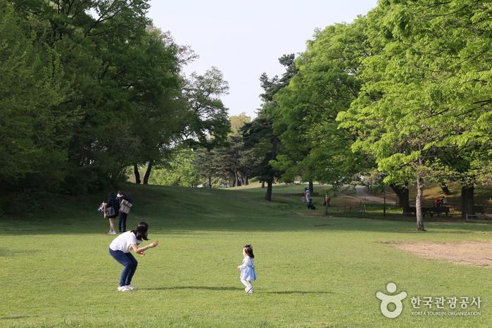 언제든 아이와 푸른 잔디밭 위에서 놀 수 있는 올림픽 공원