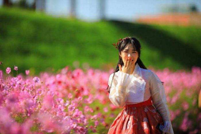 瑞山菊祭り(서산국화축제)