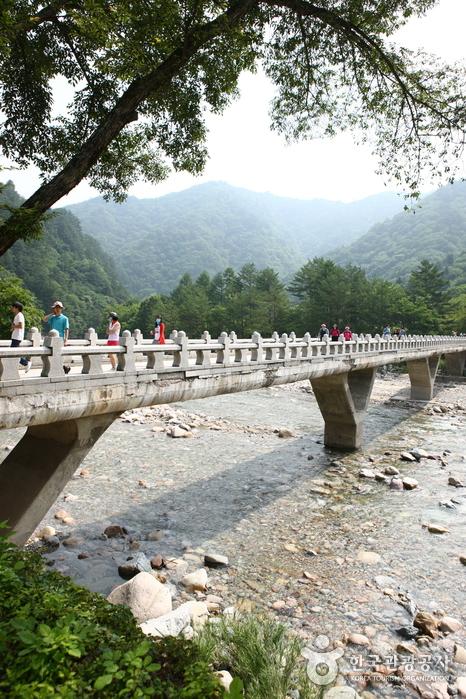 Baekdam Valley (백담계곡)