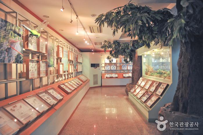 Yangpyeong Wild Flower Arboretum (양평 들꽃수목원)