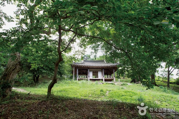 Damyang Myeongokheonrimwon Garden (담양 명옥헌 원림)
