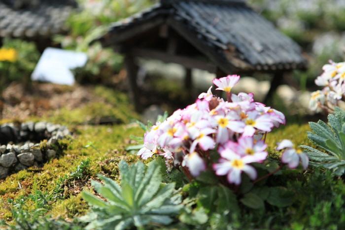 Korean Peninsula Wild Flower Exhibition of The Garden of Morning Calm (아침고요 한반도 야생화전)