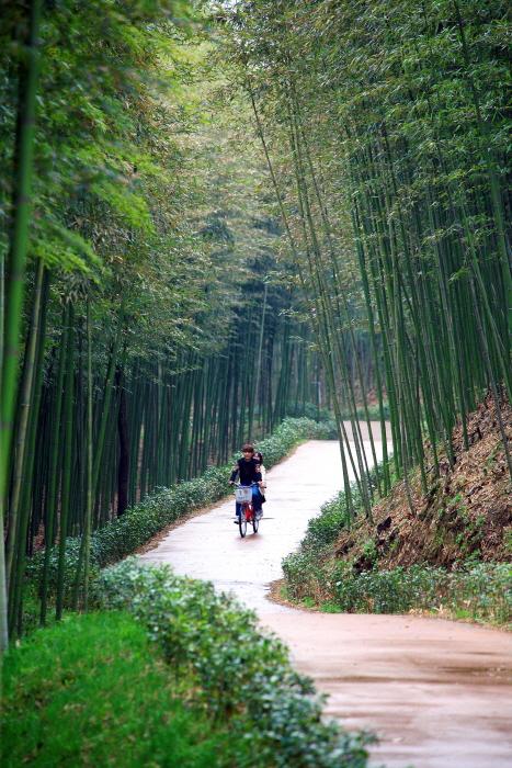 자전거를 타고 섬진강 변 대나무 숲을 지나는 연인