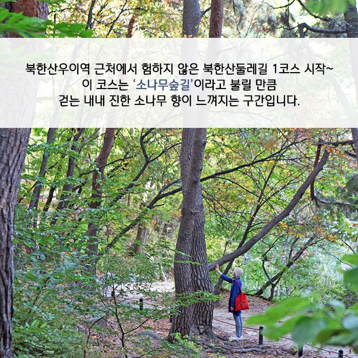 북한산우이역 근처에서 험하지 않은 북한산둘레길 1코스 시작~ 이 코스는 '소나무숲길'이라고 불릴 만큼 걷는 내내 진한 소나무 향이 느껴지는 구간입니다.