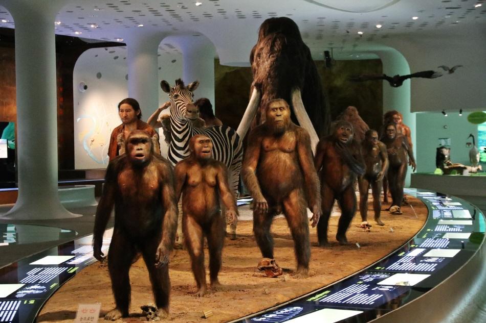 전곡선사박물관에 전시된 '인류 진화의 위대한 행진'