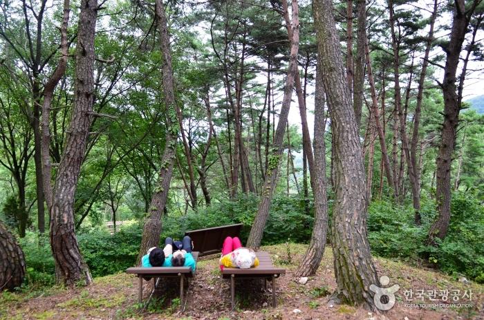 숲길에서 즐기는 산림욕