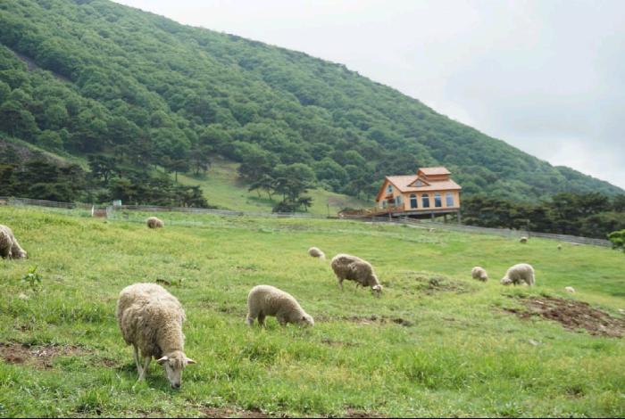 무등산 양떼목장