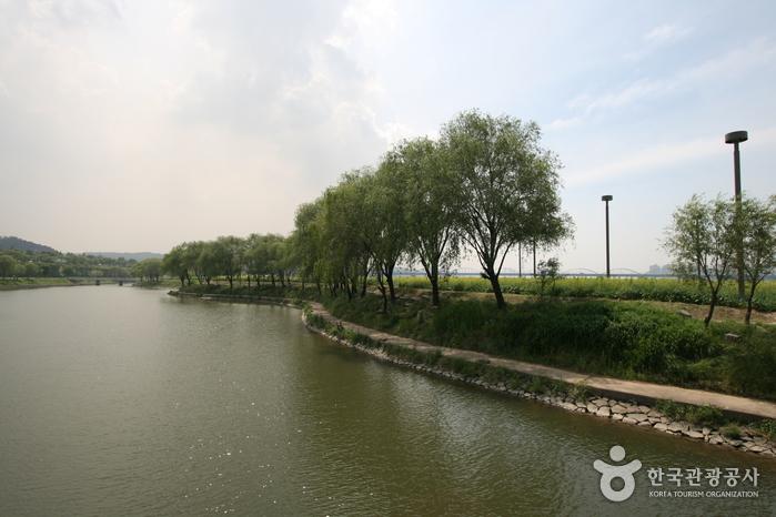 漢江ソレ島 菜の花祭り(한강 서래섬 유채꽃축제)