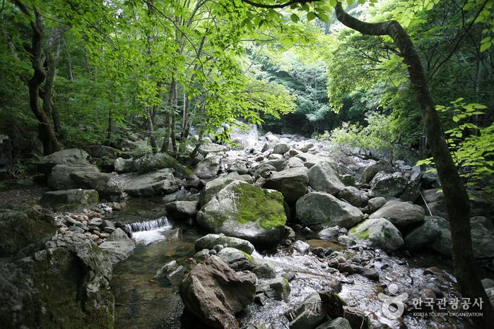 국립 지리산자연휴양림