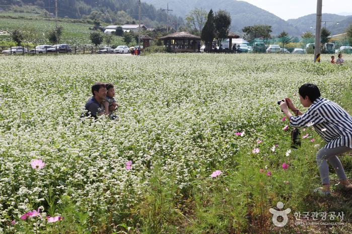 Hyoseok Cultural Festival (평창 효석문화제)