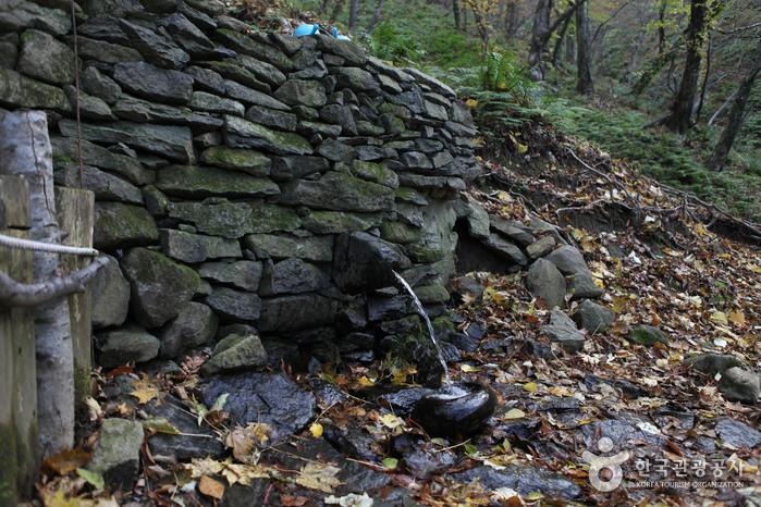 Bosque Primitivo del Pico Seonginbong (성인봉 원시림 (울릉도, 독도 국가지질공원))20