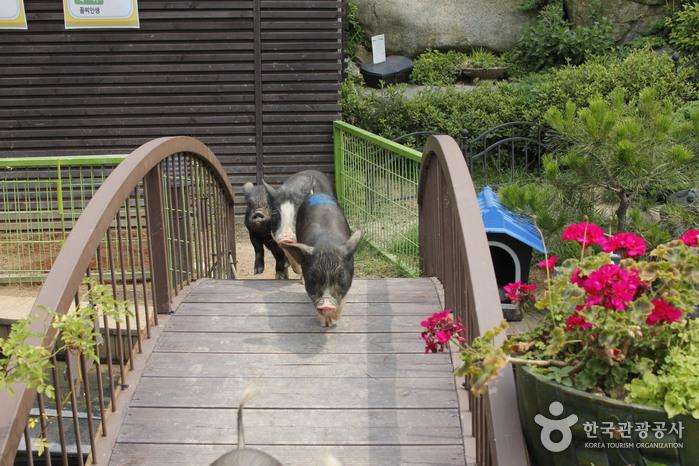 돼지문화원
