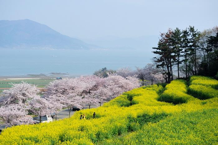 벚꽃 바다 남해로 떠나는 미각 여행
