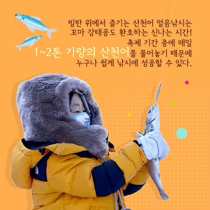 冰鲑鱼,享受冰上钓鱼是一个激动人心的时刻欢呼甚至gangtaegong孩子! 由于节期间释放的每天约1-2吨鳟鱼,每个人都可以在钓鱼轻易得手。