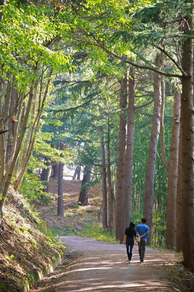 아홉산숲을 걷는 사람들