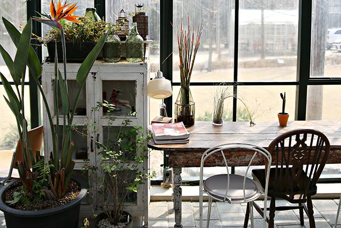 봄날 미세먼지, 황사 속 '초록 해방구' 서울 근교 이색 플랜테리어 카페