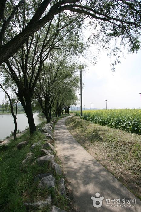 Hangang Seoraeseom Canola Festival (한강 서래섬 유채꽃축제)
