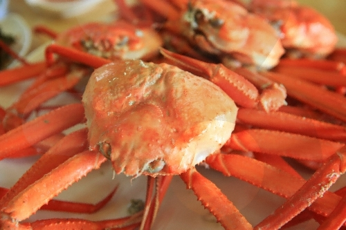 Uljin Snow Crab & Red Snow Crab Festival  (울진대게와 붉은대게 축제)