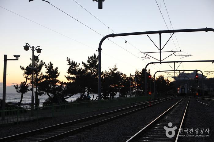 Jeongdongjin Sunrise Park (정동진 해돋이 공원)