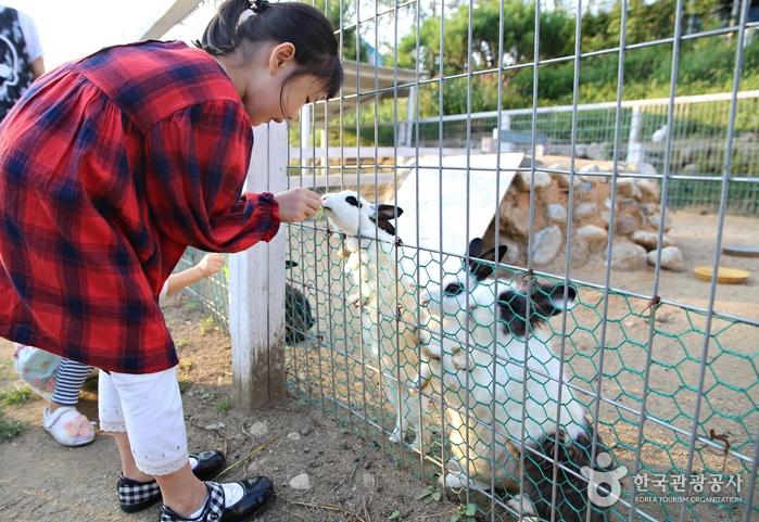 '가축이 사는 뜰'은 아이들이 특히 좋아한다