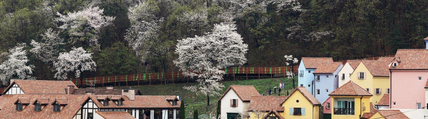꽃 따라 나비 따라 떠나는 봄날여행 사진