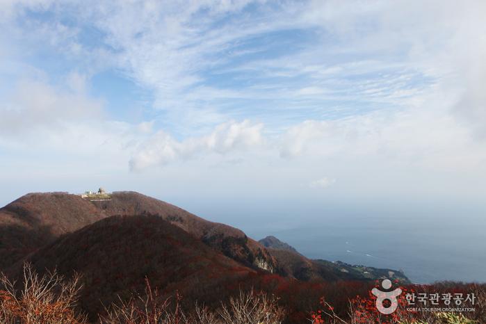 Bosque Primitivo del Pico Seonginbong (성인봉 원시림 (울릉도, 독도 국가지질공원))2